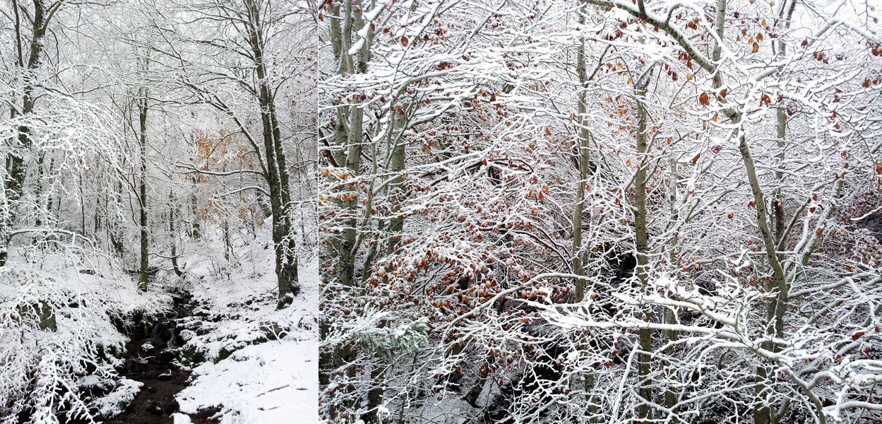 bosques-nevados
