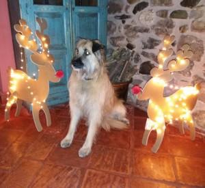 Loco Navidad