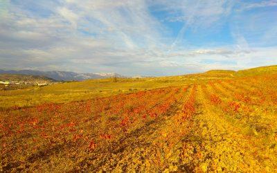 Enoturismo y visitas guiadas en La Rioja: Riojatrek