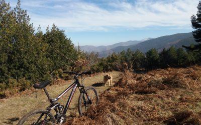 Hayedos, acebales, pinares, mountain bike, buena compañía y mejor comida y bebida… Todo sin salir de Valgañón, en el Valle de Ezcaray.