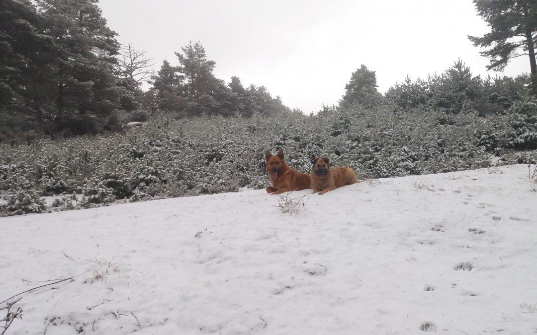 Volvemos a tener nieve recién caída en Valdezcaray…