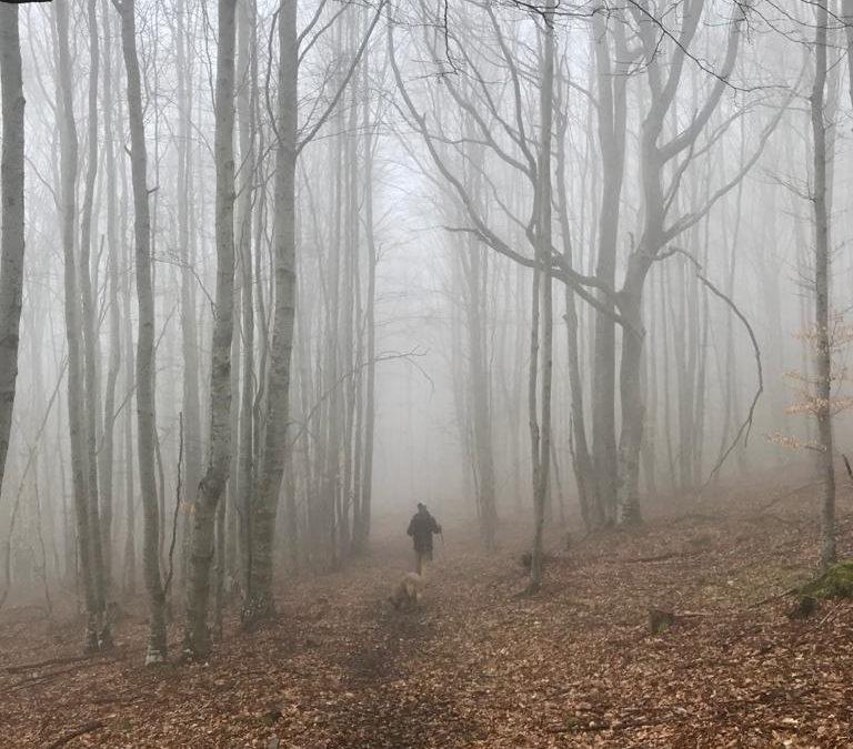Hayedos entre Ezcaray y Valgañón. Paseos entre la niebla y cumbres soleadas.